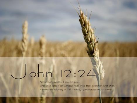 grain-of-wheat-photo-co-farmcpatoday1